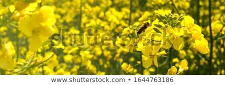 Mező nemi erőszak nyár kék horizont mezőgazdaság Stock fotó © monkey_business