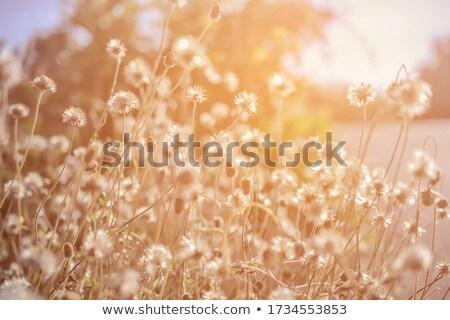 doce · dom · cores · naturalismo · comida - foto stock © janpietruszka