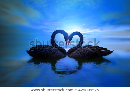 swans in love in the moonlight Stock photo © adrenalina
