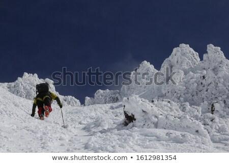 Inverno ver japonês montanhas floresta Ásia Foto stock © craig