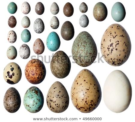 big eggs collection white background stock photo © adamson
