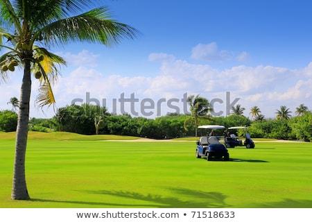 Golfpálya trópusi pálmafák Mexikó Cancun fa Stock fotó © lunamarina