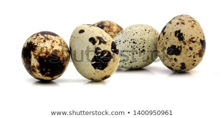卵 白 クローズアップ 食品 鳥 ストックフォト © Epitavi
