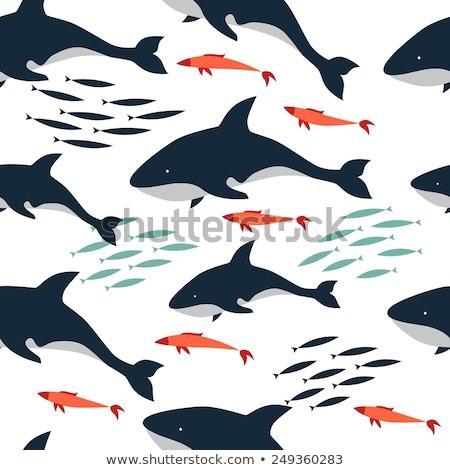 убийца · кит · вектора · clipart · иллюстрация · плаванию - Сток-фото © colematt