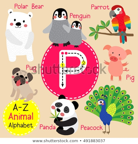 Cartoon Pig is for P Letter Children Zoo Alphabet Stock photo © robuart