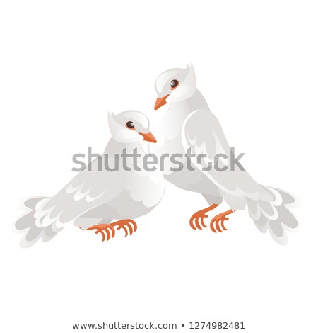 Two wedding doves isolated on white background. Symbol of love and wedding. Vector cartoon close-up  Stock photo © Lady-Luck