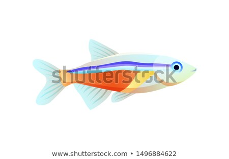 Bright Neon Tetra Fish Isolated on White Poster Stock photo © robuart