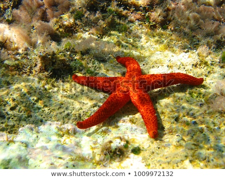 Piros tengeri csillag fehér homok napos trópusi tengerpart égbolt Stock fotó © galitskaya