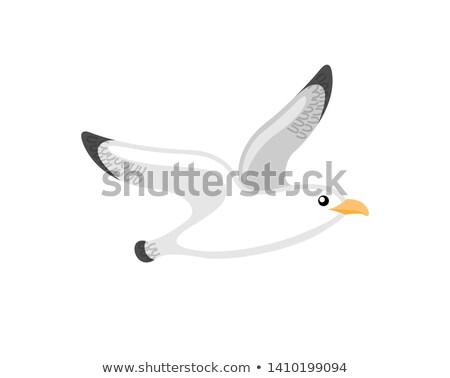 Stilizált tengerészeti kicsi sirály embléma vektor Stock fotó © robuart