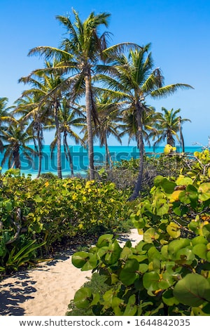 Contoy Island palm treesl caribbean beach Mexico Stock photo © lunamarina