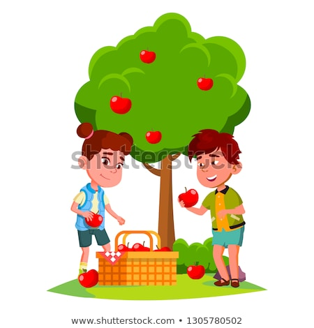 kids harvest apples in basket near apple tree vector isolated illustration stock photo © pikepicture