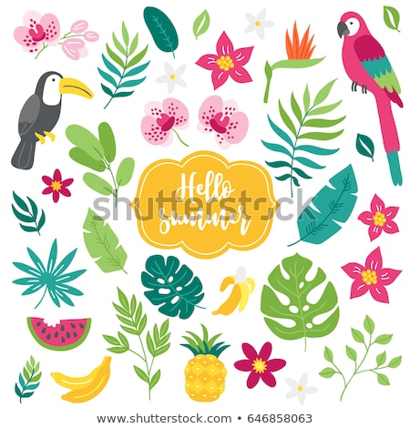 Establecer tropicales selva ilustración forestales naturaleza Foto stock © bluering