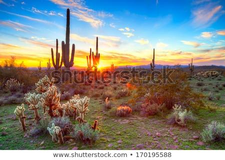 Zonsondergang Arizona woestijn landschap bergen zonnige Stockfoto © liolle