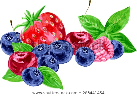 raspberries blueberries and strawberries on white background watercolor illustration stock photo © conceptcafe