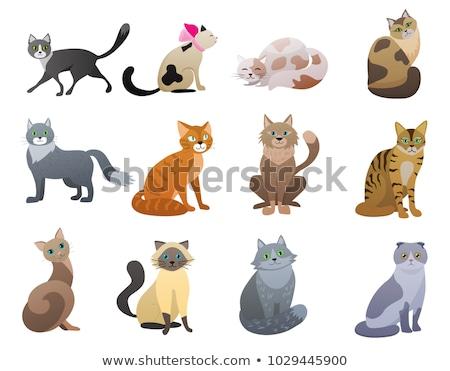 gatos · Cartoon · establecer · ilustración · gatitos - foto stock © izakowski