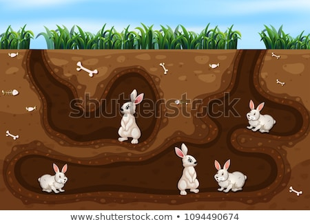 Rabbit living in underground Stock photo © colematt