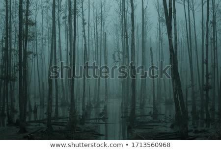 болото · голландский · природы · деревья · Голландии - Сток-фото © tarczas