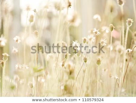 crescente · primavera · natureza · folha · jardim - foto stock © meinzahn