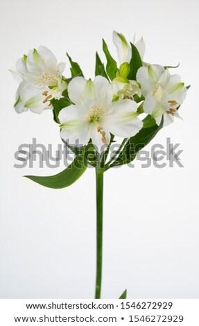 白 花 黒 結婚式 愛 幸せ ストックフォト © compuinfoto