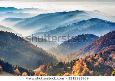 picturesque forest Stock photo © tracer