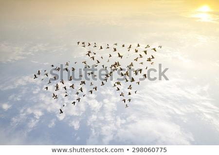 Leiderschap groei ontwerp business abstract succes Stockfoto © SArts