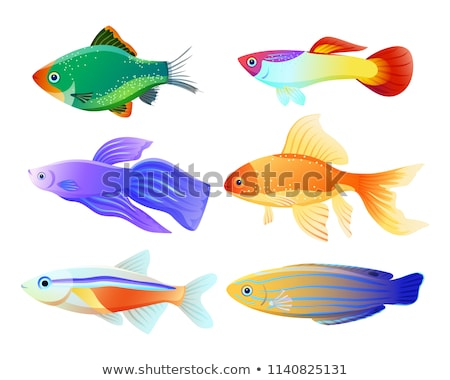 Green Tiger Barb and Guppy Fish Vector Posters Stock photo © robuart