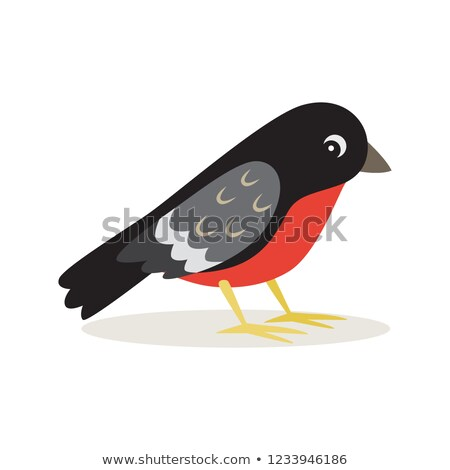 Icon of bullfinch with red breast in profile isolated Stock photo © MarySan