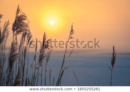 Zamrożone charakter trawy zimą jezioro wysoki Zdjęcia stock © oksanika