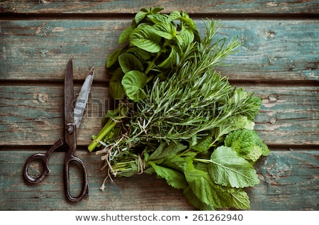 Herbs From The Garden In A Basket Photo stock © mythja
