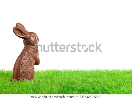 шоколадом Пасхальный заяц зеленый красочный изолированный текстуры Сток-фото © Grazvydas