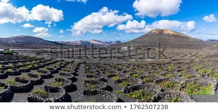 Foto stock: Vines · parede · paisagem · verde · folhas · preto