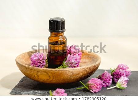 rosa · trevo · flores · coberto · primavera - foto stock © valeriy