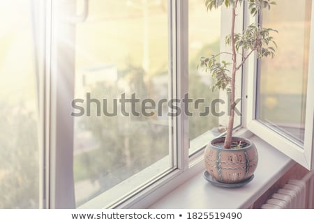 Foto stock: Branco · plástico · janela · isolado · luz · vidro
