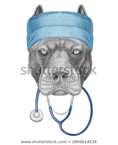 bull mastiff and puppy cane corso portrait in a white studio Stock photo © vauvau