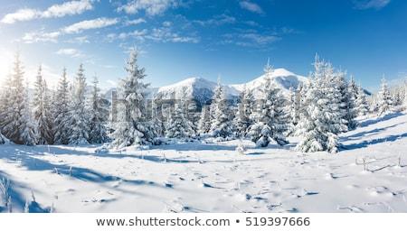 Enfeitar árvore neve montanha colina natal Foto stock © Kotenko