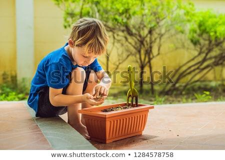 Küçük sevimli erkek tohumları saksı bahçe Stok fotoğraf © galitskaya