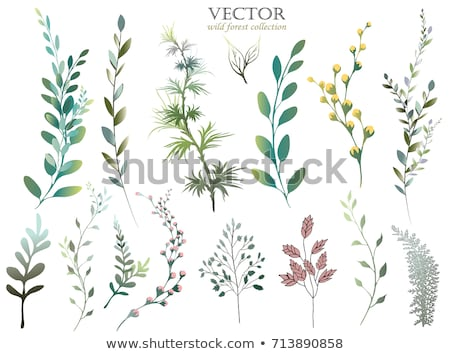 Floral spring bouquet nature set isolated Stock photo © cienpies