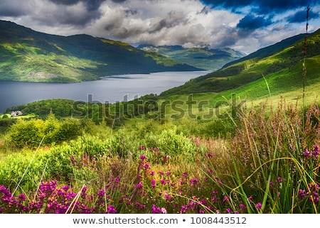 landscape at Loch Lomond Stock photo © prill