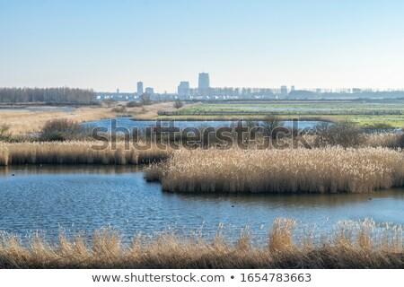 nature park the oostvaardersplassen in holland Stock photo © compuinfoto
