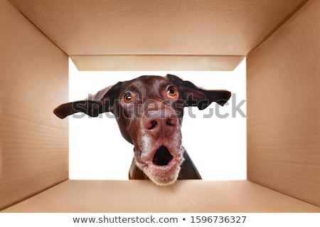 dog in a box stock photo © gemenacom