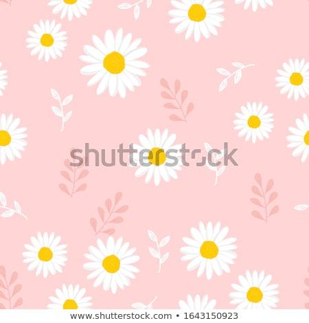 Pembe papatya yeşil çiçek doku bahar Stok fotoğraf © chris2766