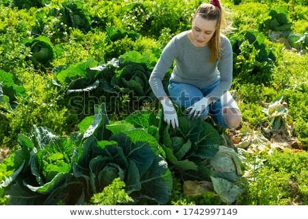 Woman examining leafy vegetables Stock photo © wavebreak_media
