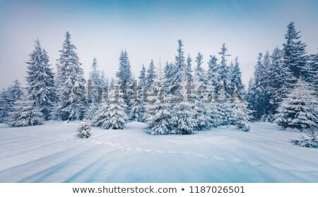 Stock photo: Beautiful pictures of nature in winter