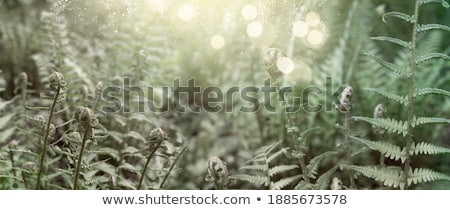 green ferm sprouts under sun Stock photo © neirfy