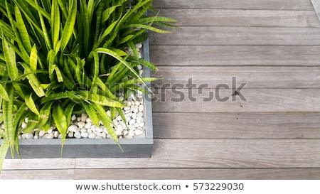 Urban landscape design, green plant and vase outdoors in the city center Stock photo © Anneleven