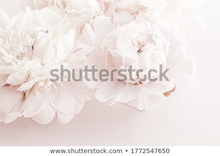 Pastel fleurs floral art botanique luxe Photo stock © Anneleven