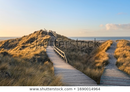footpath Stock photo © trgowanlock