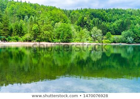 лес плохо Австрия небольшой реке Blue Sky Сток-фото © meinzahn