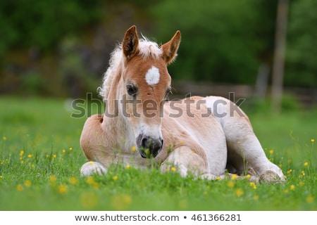 ребенка · лошади · трава · природы · зеленый · синий - Сток-фото © zurijeta