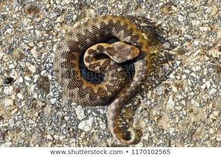 Jeugdig neus voorjaar natuur slang dier Stockfoto © taviphoto